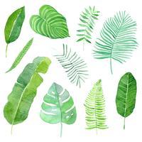 akvarell tropiska blad uppsättning vektor