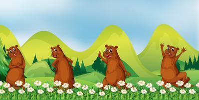 Beavers i fältet