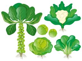 Olika typer av huvud grönsaker