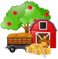 Kyckling står på hö på gården