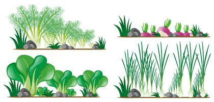 Fyra sorters grönsaker i trädgården vektor