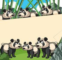 Pappersbakgrund med panda i bambuskog