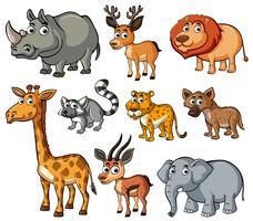 Verschiedene Arten wilder Tiere