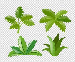 Olika typer av växter vektor