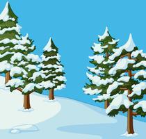 Pine träd täckt med snö