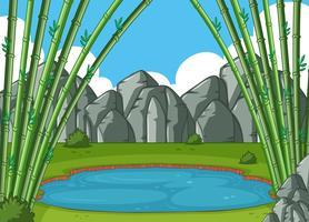 Scen med bambu träd vid dammen