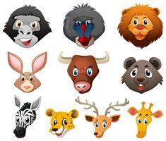 Verschiedene Arten von Wildtieren vektor