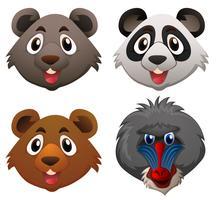 Vier Gesichter von wilden Tieren