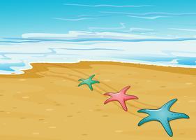 Tre färgglada sjöstjärnor på stranden