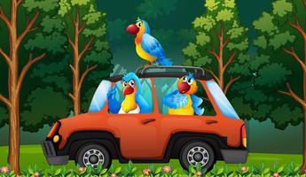 En grupp papegoja på bilen