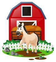 Vit häst på gården