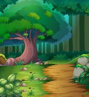 Skogsmark med vandringsspår