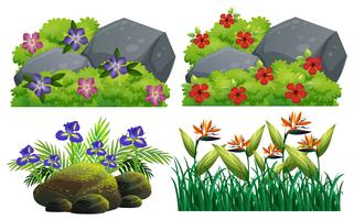 Verschiedene Arten von Blumen im Busch vektor