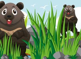 Två grizzlybjörnar på gräs