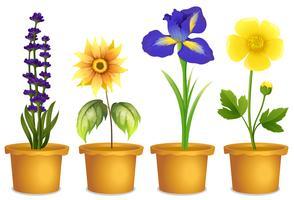 Olika typer av blommor i krukor vektor