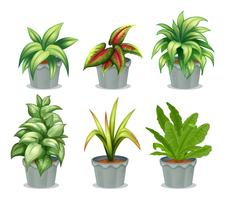 Grüne Blattpflanzen vektor