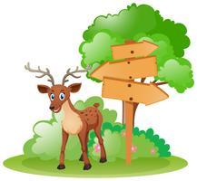 Hjort står vid träskyltarna