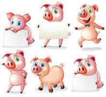 Schweine mit leeren Schildern vektor