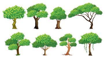 Träduppsättning vektor