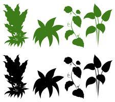 Set av siluettplanta