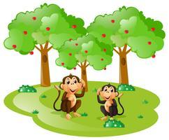 Zwei Affen im Wald