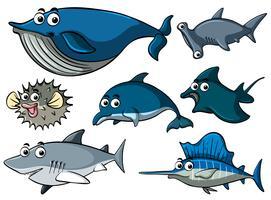 Olika typer av hajar vektor