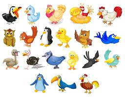 Fåglar vektor