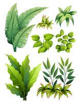 Verschiedene Arten von Blättern vektor