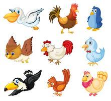 Sammlung von Vögeln vektor