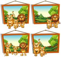 Fyra fotoramar av lejonfamilj