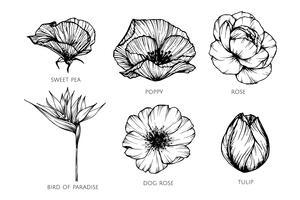 Samling uppsättning av blomdrack illustration.