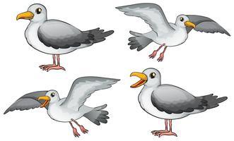 Vier Vögel vektor
