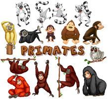 Olika typer av primater vektor