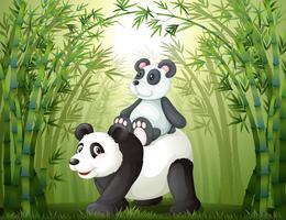 Två pandor inuti bambuskogen vektor