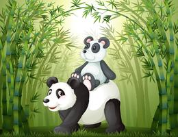 Zwei Pandas im Bambuswald