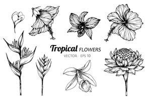 Sammlungssatz der tropischen Blumenzeichnungsillustration. vektor