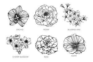 Sammlungssatz der Blumenzeichnungsillustration.