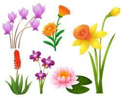 Verschiedene Arten von tropischen Blumen