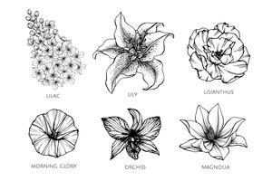 Sammlungssatz der Blumenzeichnungsillustration. vektor