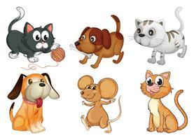Sex olika djur med fyra ben