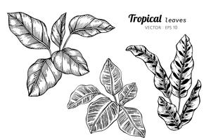 Sammlungssatz tropische Blätter, die Illustration zeichnen. vektor
