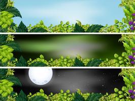 Tre trädgårdsscenarier vid olika tider på dagen