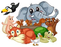Andere Arten von Tieren
