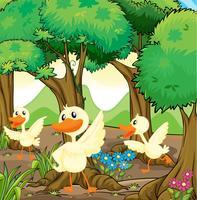 Drei weiße Enten mitten im Wald