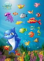 Haj och fisk simma under havet