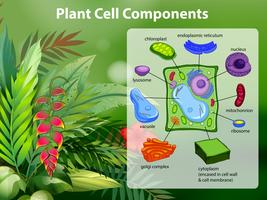 Pflanzenzelle Komponenten Diagramm vektor