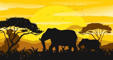Hintergrundszene mit Schattenbildelefanten auf dem Gebiet