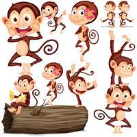 Süße Affen in verschiedenen Positionen vektor