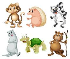 Sex olika slags vilda djur
