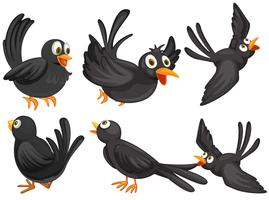 Schwarze Vögel